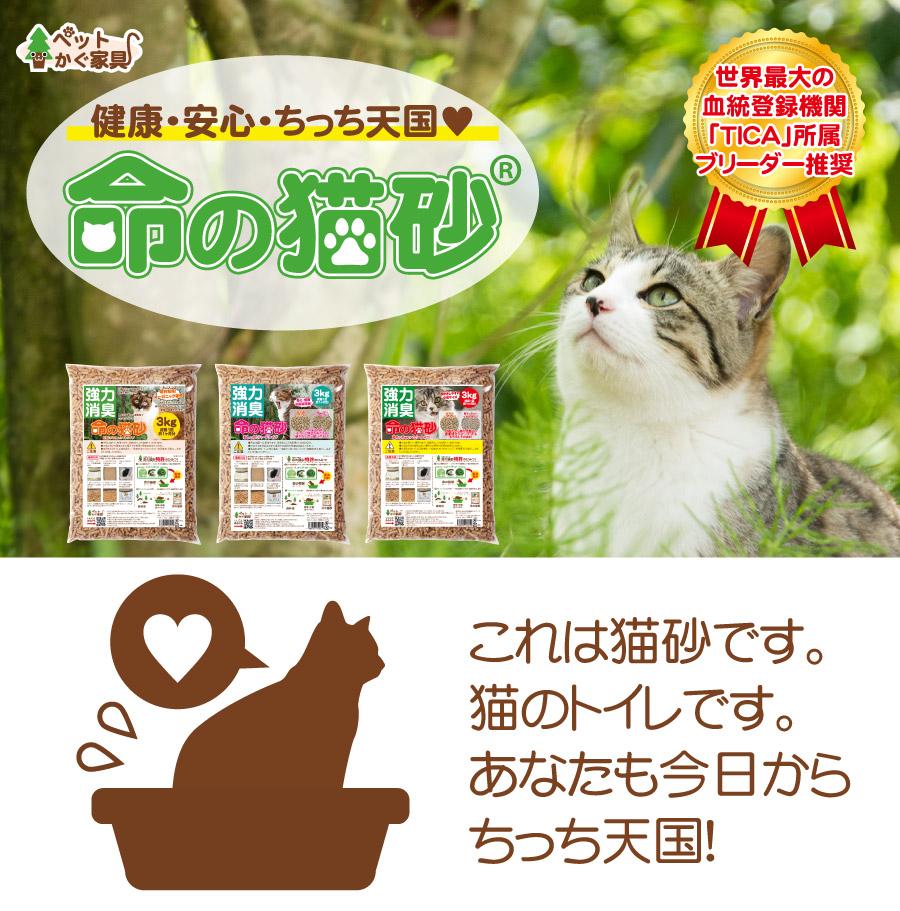 猫の健康を守る